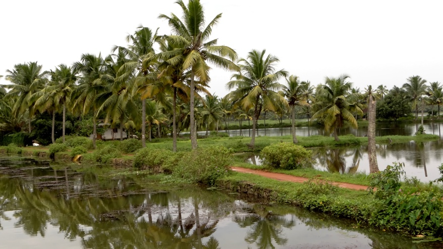 a_typical_kerala_countryside.jpg