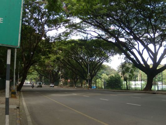 bangalore trees2