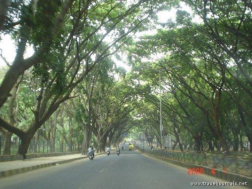 bangalore trees3