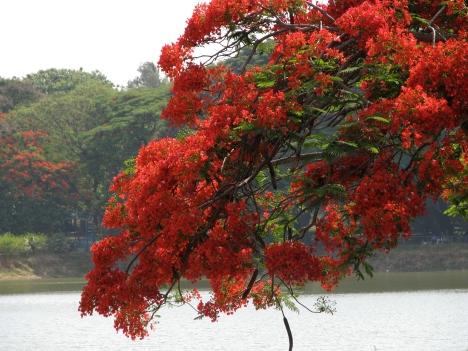 India_-_Bangalore.jpg