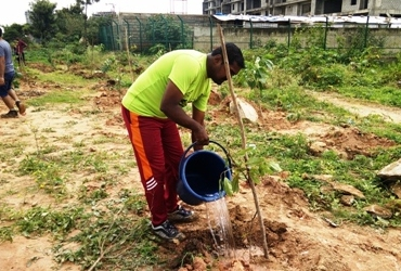 tree-plantation-lake-bangalore-india-7