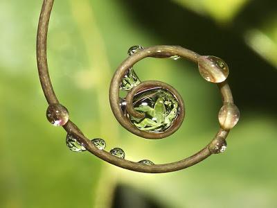 Circle_of_Life