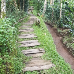 the path inside