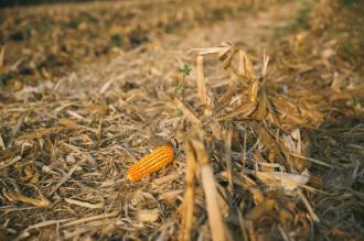 corn & chaff