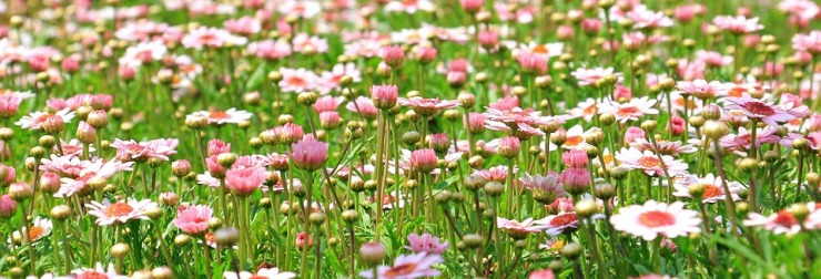 flower-meadow-1510602_960_720